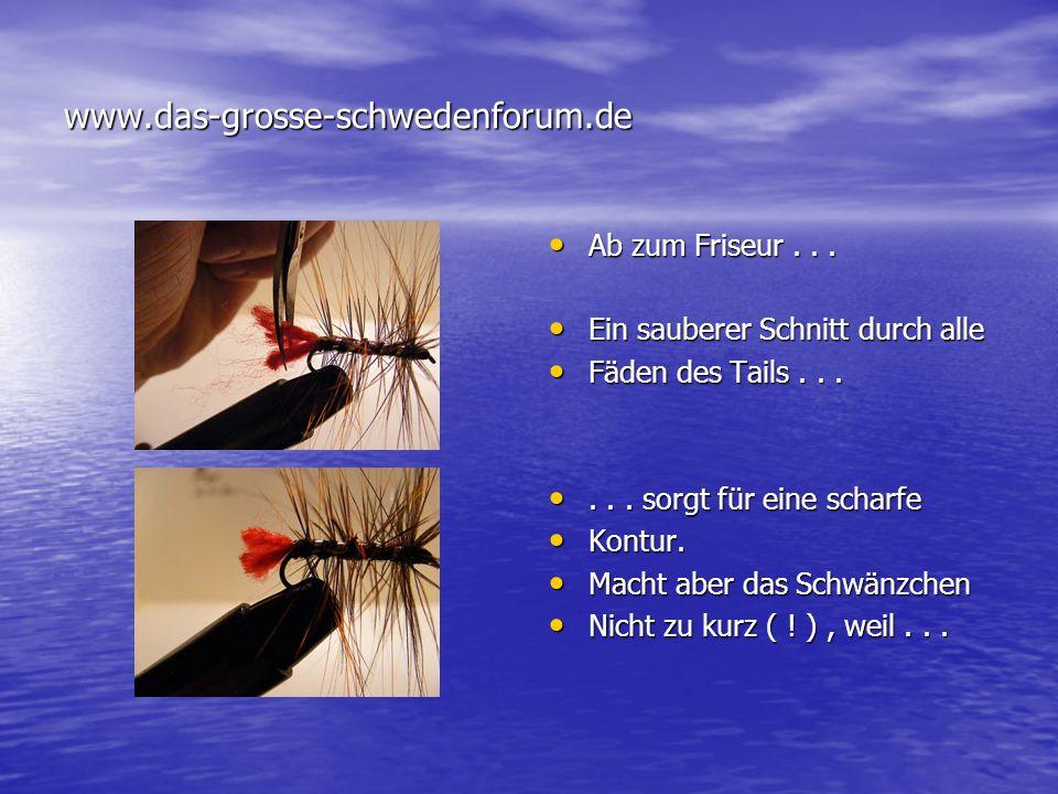 Copyright by Frank Orlowski Iserlohn...jetzt noch die Webstruktur...