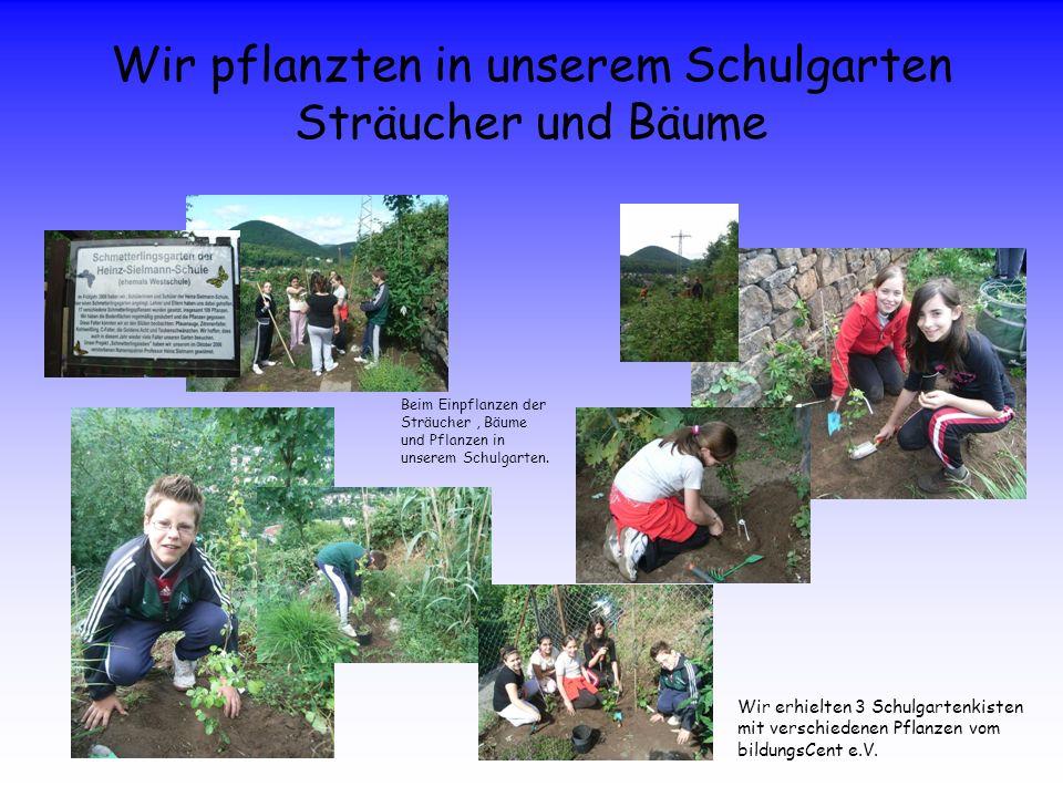 Wir pflanzten in unserem Schulgarten Sträucher und Bäume Wir erhielten 3 Schulgartenkisten mit verschiedenen Pflanzen vom bildungsCent e.V. Beim Einpf