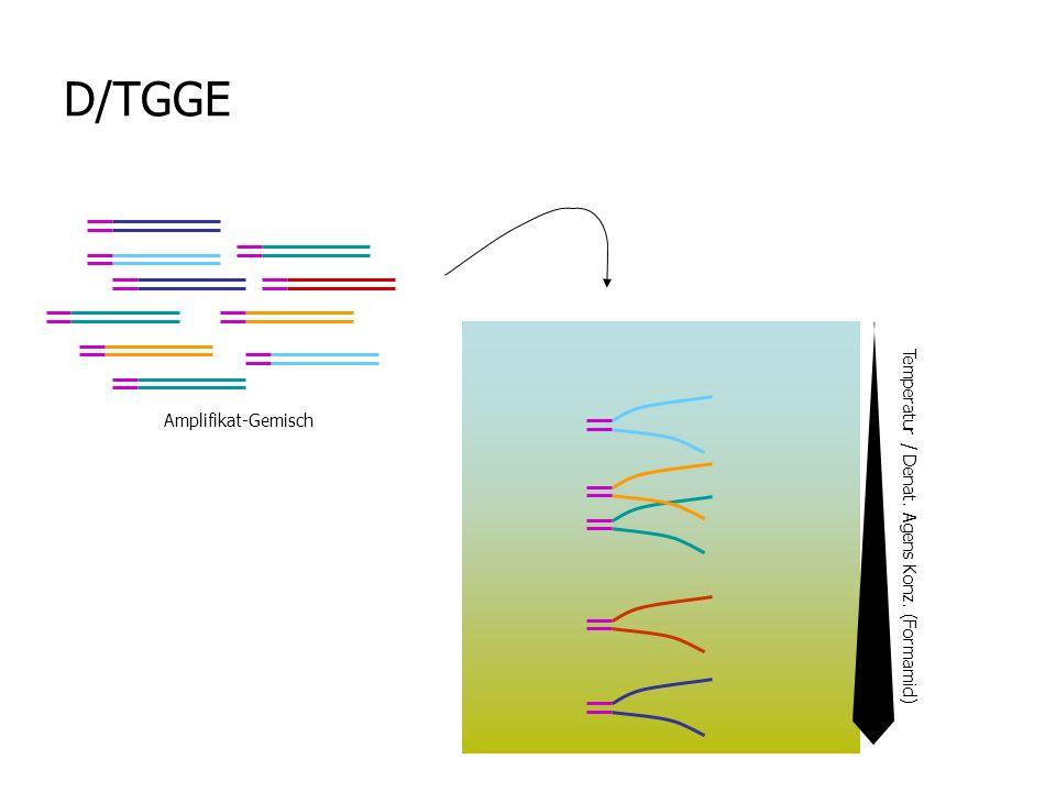 D/TGGE Amplifikat-Gemisch Temperatur / Denat. Agens Konz. (Formamid)