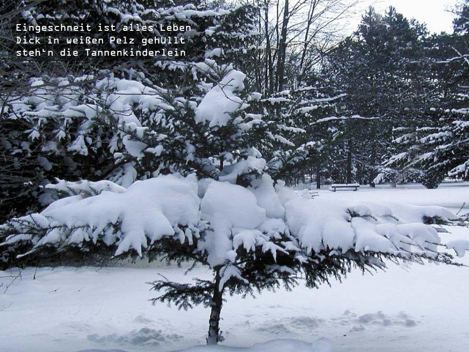 Und wie von hoher Macht bezwungen Liegt Schnee jetzt überall