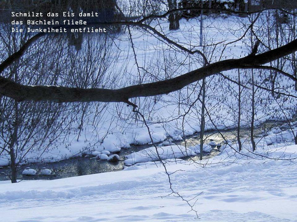 Wintersonne zaubert Schattenkinder Erhellt den düstren Wald durch Licht