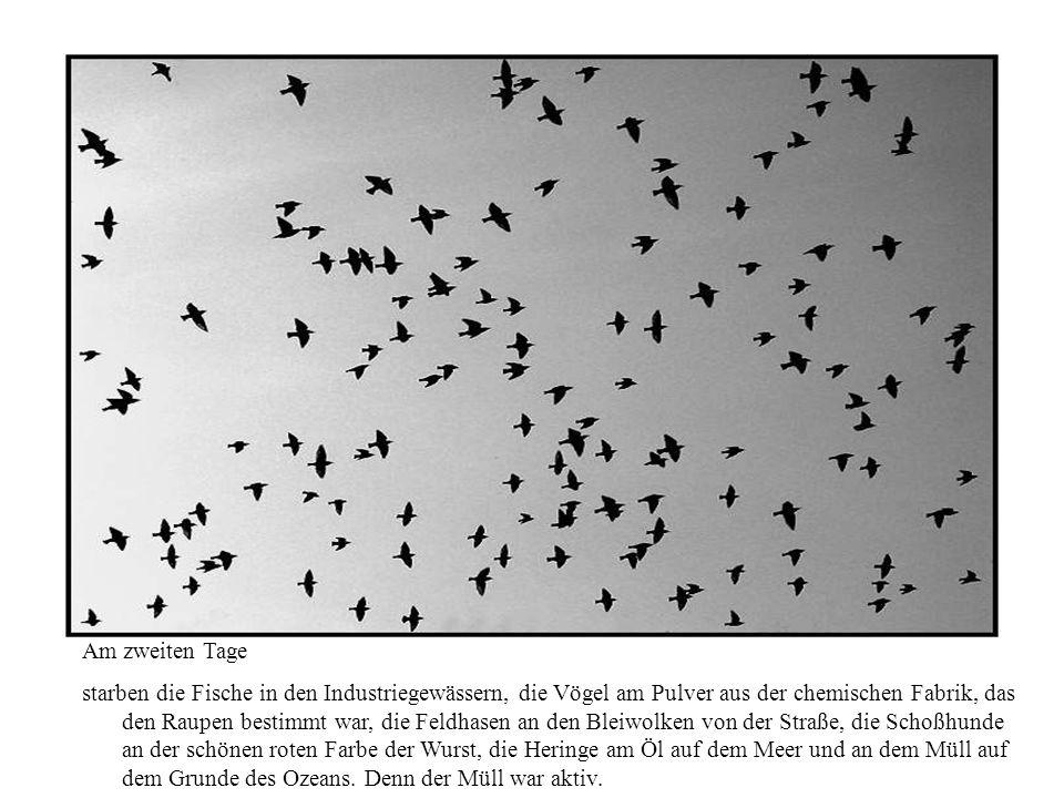 Am zweiten Tage starben die Fische in den Industriegewässern, die Vögel am Pulver aus der chemischen Fabrik, das den Raupen bestimmt war, die Feldhasen an den Bleiwolken von der Straße, die Schoßhunde an der schönen roten Farbe der Wurst, die Heringe am Öl auf dem Meer und an dem Müll auf dem Grunde des Ozeans.