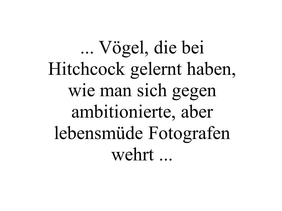 ... Vögel, die bei Hitchcock gelernt haben, wie man sich gegen ambitionierte, aber lebensmüde Fotografen wehrt...