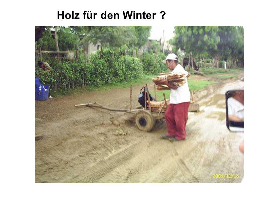 : Holz für den Winter