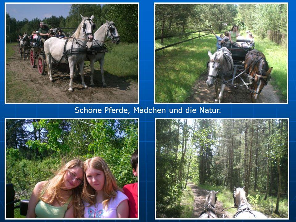 Schöne Pferde, Mädchen und die Natur.