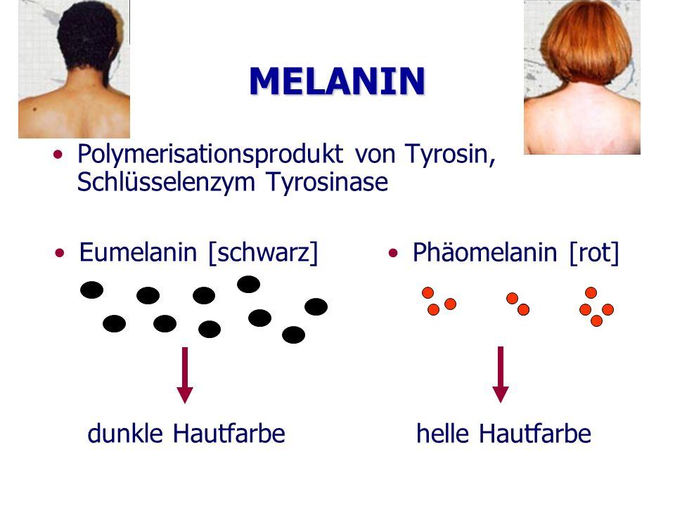 MELANIN Polymerisationsprodukt von Tyrosin, Schlüsselenzym Tyrosinase Eumelanin [schwarz] dunkle Hautfarbe Phäomelanin [rot] helle Hautfarbe