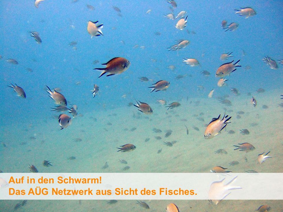 (c) flowmedia GmbH 2010 Auf in den Schwarm! Das AÜG Netzwerk aus Sicht des Fisches.
