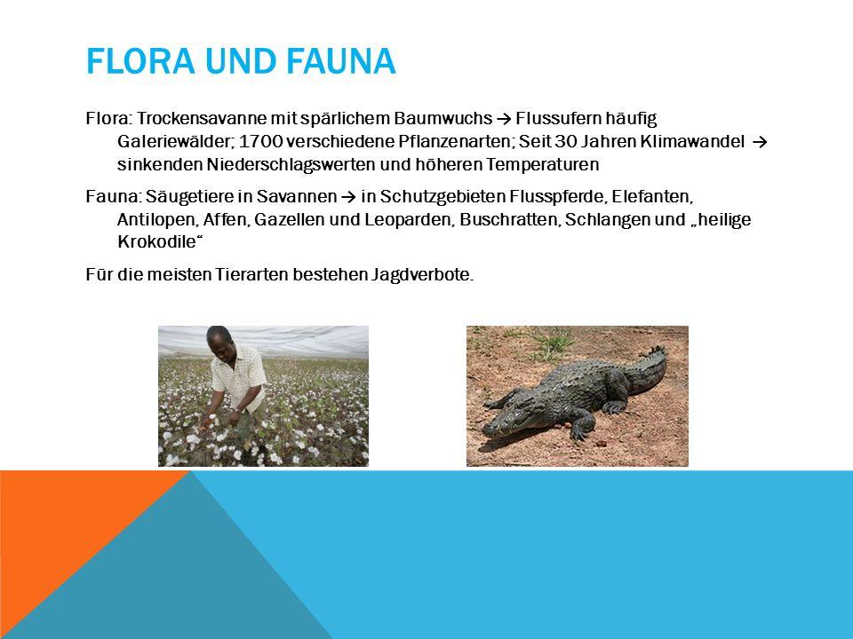 FLORA UND FAUNA Flora: Trockensavanne mit spärlichem Baumwuchs Flussufern häufig Galeriewälder; 1700 verschiedene Pflanzenarten; Seit 30 Jahren Klimaw