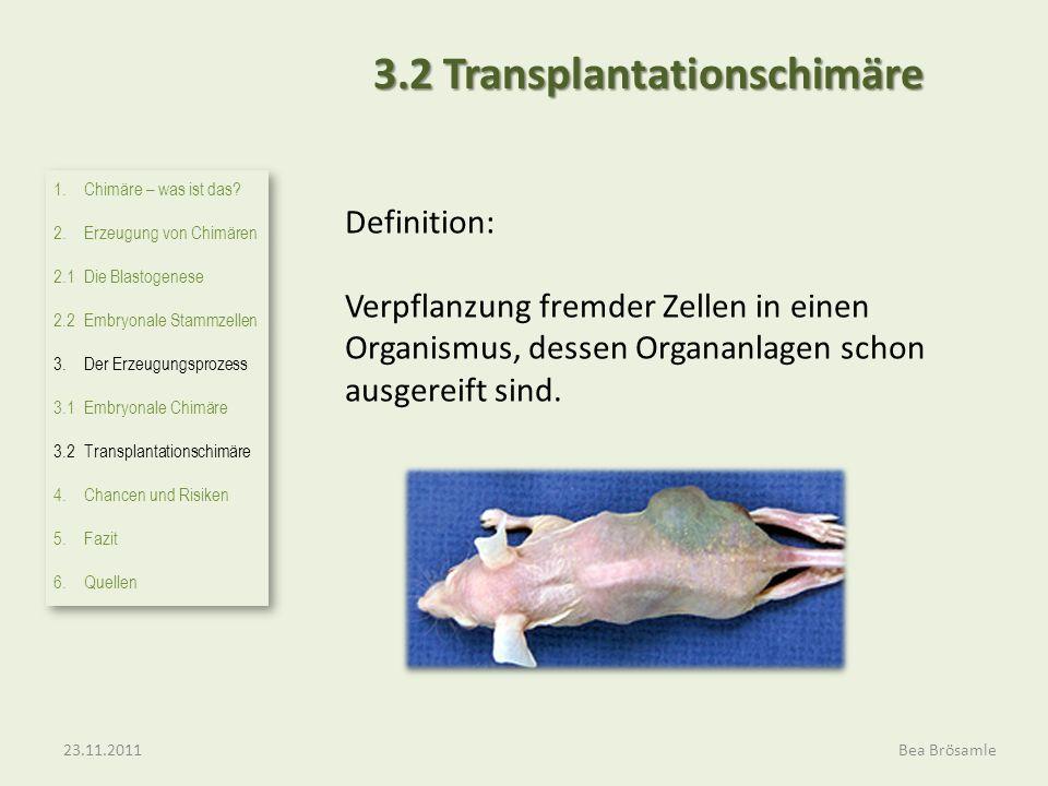 3.2 Transplantationschimäre Definition: Verpflanzung fremder Zellen in einen Organismus, dessen Organanlagen schon ausgereift sind. 23.11.2011Bea Brös