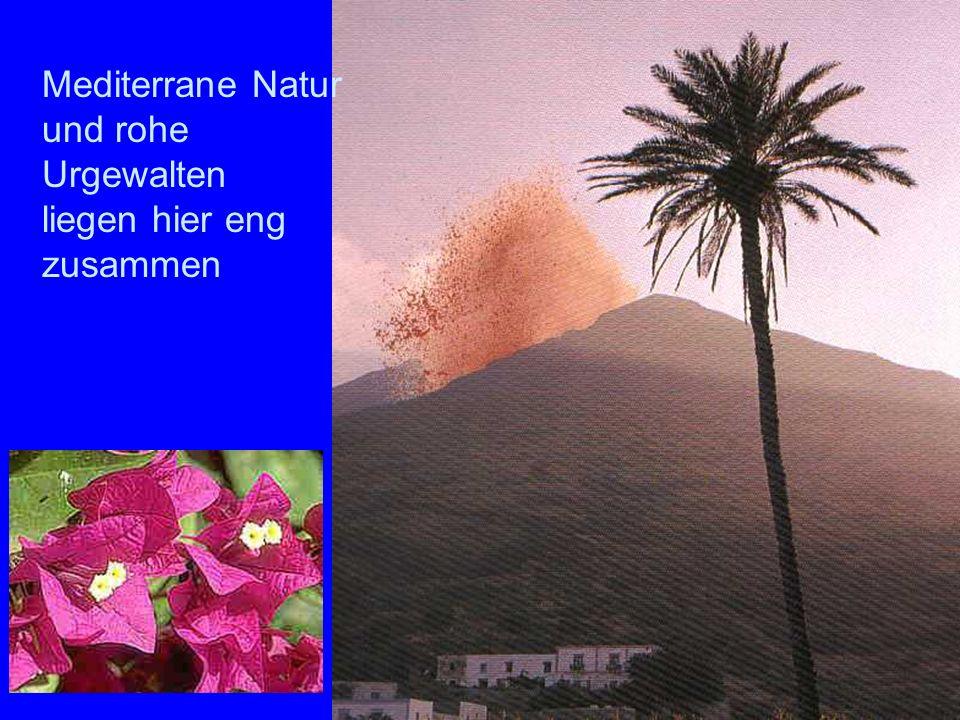 Sromboli Natur Mediterrane Natur und rohe Urgewalten liegen hier eng zusammen