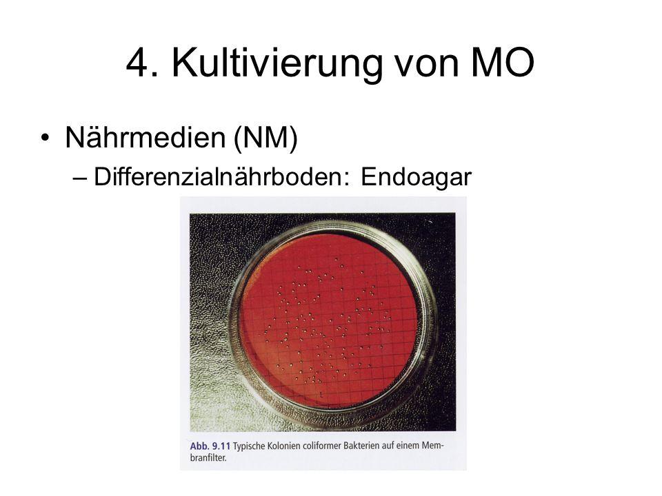4. Kultivierung von MO Nährmedien (NM) –Differenzialnährboden: Endoagar