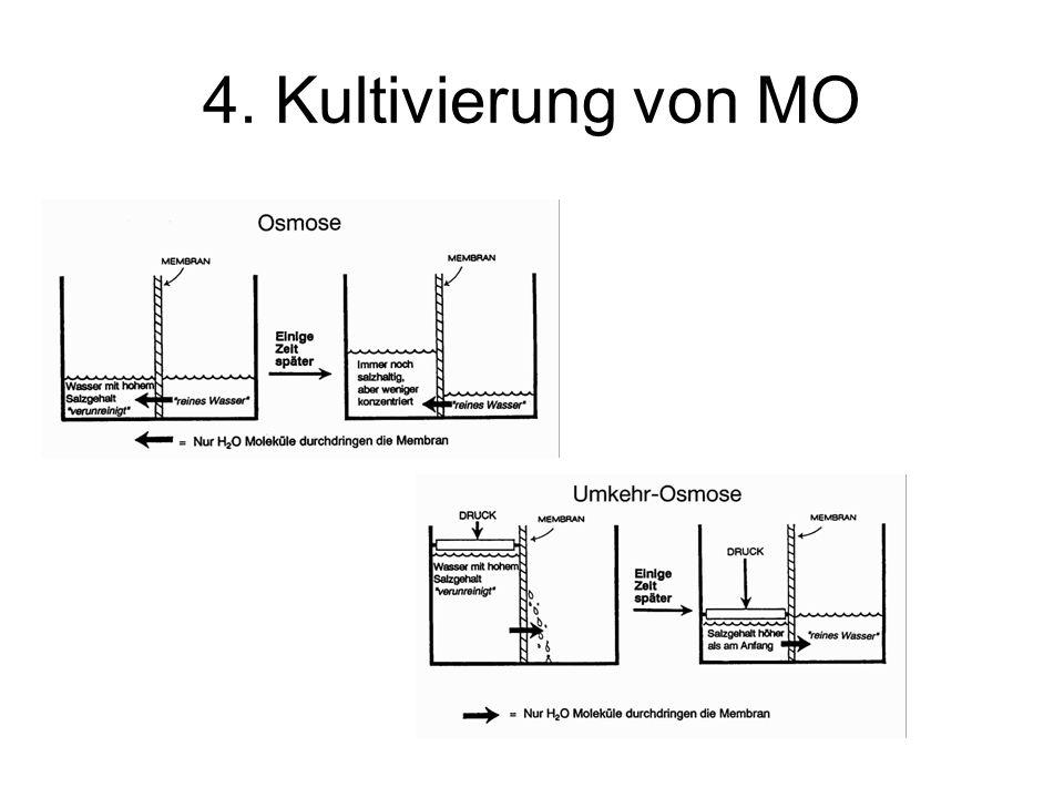 4. Kultivierung von MO