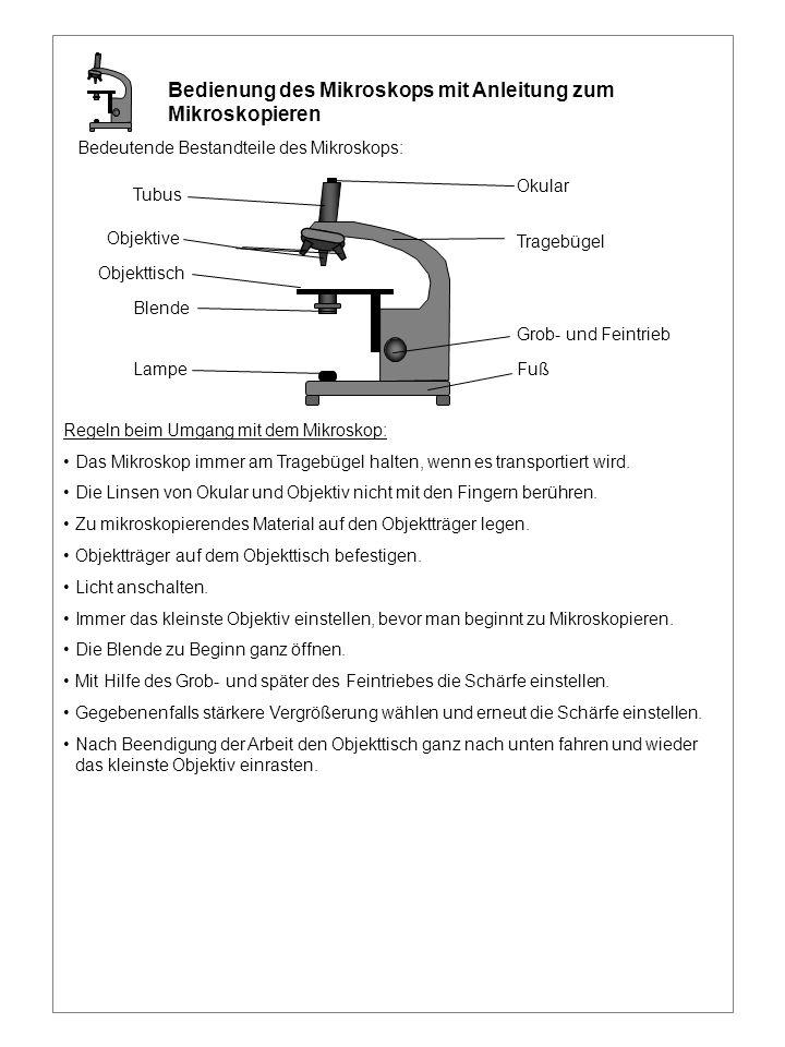 Grob- und Feintrieb Fuß Tragebügel Okular Tubus Objektive Objekttisch Blende Lampe Bedienung des Mikroskops mit Anleitung zum Mikroskopieren Bedeutend