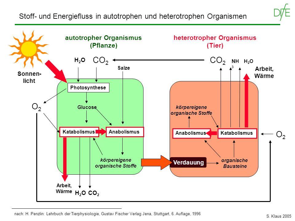 aus: K Schmidt-Nielsen, Animal Physiology, 1983 Energieumsatz (kcal/h) Körpergewicht (kg) 10 -15 10 -6 10 -9 10 -12 10 -3 10 0 10 3 10 -12 10 -3 10 -6 10 -9 10 0 10 3 Homoiotherme =Endotherme (Warmblüter, 37°C) Poikilotherme =Ektotherme (Wechselwarme, 20°C) Einzeller 20°C 1.0 0.67 Größenabhängigkeit des Energieumsatzes EU Gewicht 0,75 EU = a x Gewicht 0,75 S.