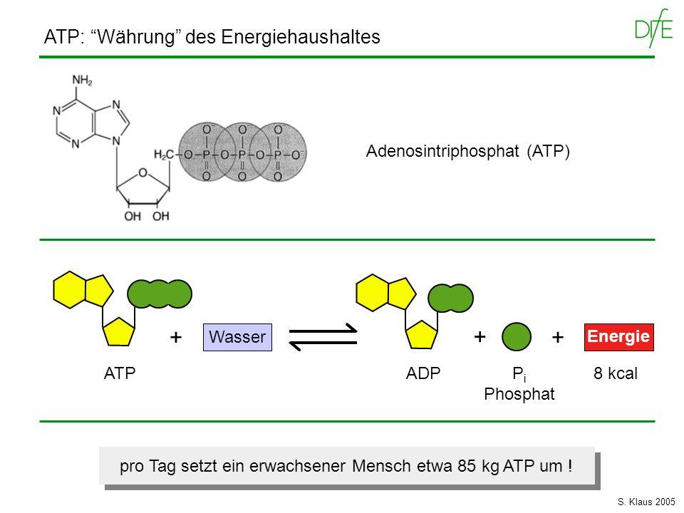 Wasser Energie Adenosintriphosphat (ATP) ATP: Währung des Energiehaushaltes + ATPADP + + P i Phosphat 8 kcal pro Tag setzt ein erwachsener Mensch etwa
