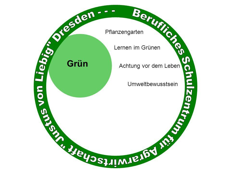 Grün Achtung vor dem Leben Umweltbewusstsein Pflanzengarten Lernen im Grünen