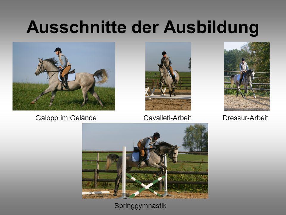 Ausschnitte der Ausbildung Galopp im GeländeCavalleti-ArbeitDressur-Arbeit Springgymnastik