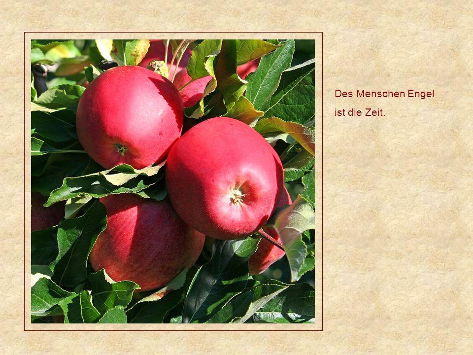 Ein Acker der ausruhen konnte, liefert prächtige Ernte.