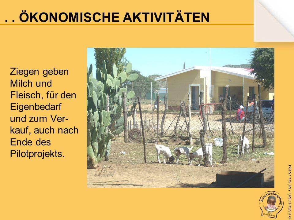 © BfdW / GMÖ / MÖWe / VEM Ziegen geben Milch und Fleisch, für den Eigenbedarf und zum Ver- kauf, auch nach Ende des Pilotprojekts....