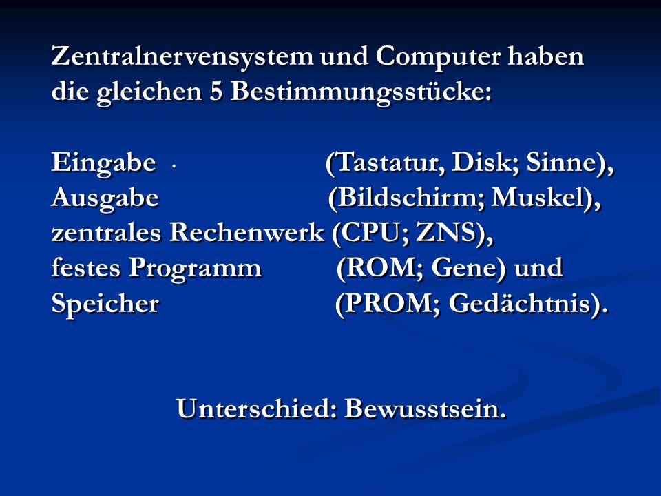 . Zentralnervensystem und Computer haben die gleichen 5 Bestimmungsstücke: Eingabe (Tastatur, Disk; Sinne), Ausgabe (Bildschirm; Muskel), zentrales Re