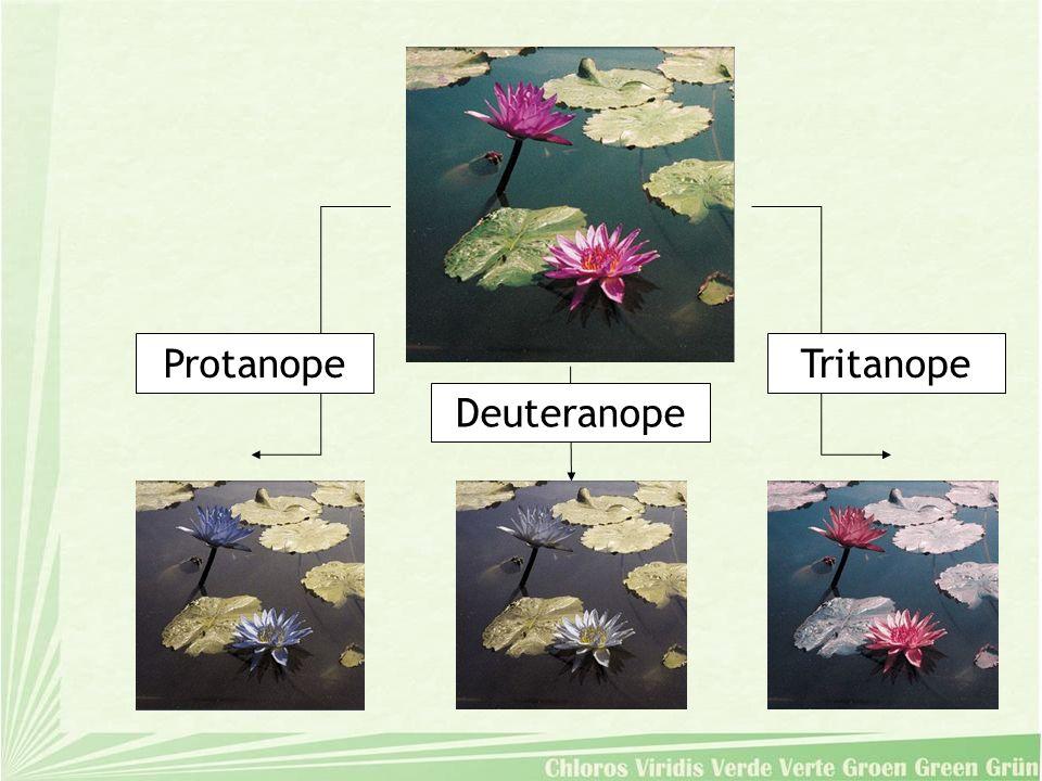 Protanope Deuteranope Tritanope