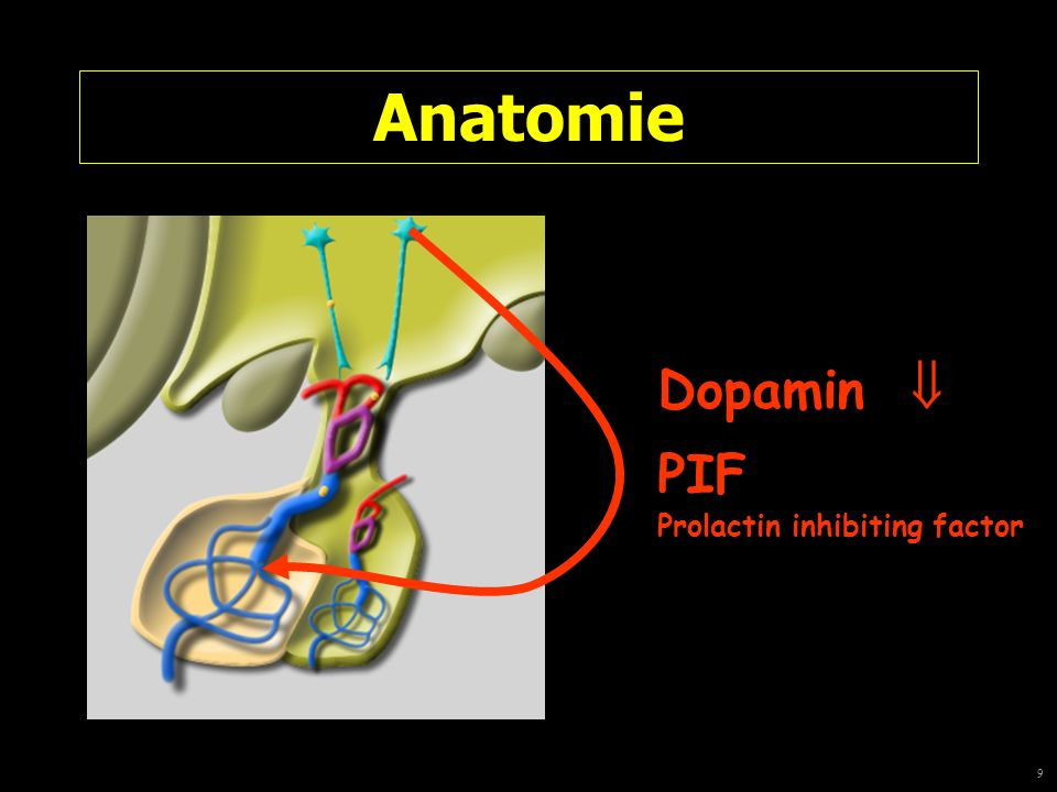 9 Anatomie Dopamin PIF Prolactin inhibiting factor