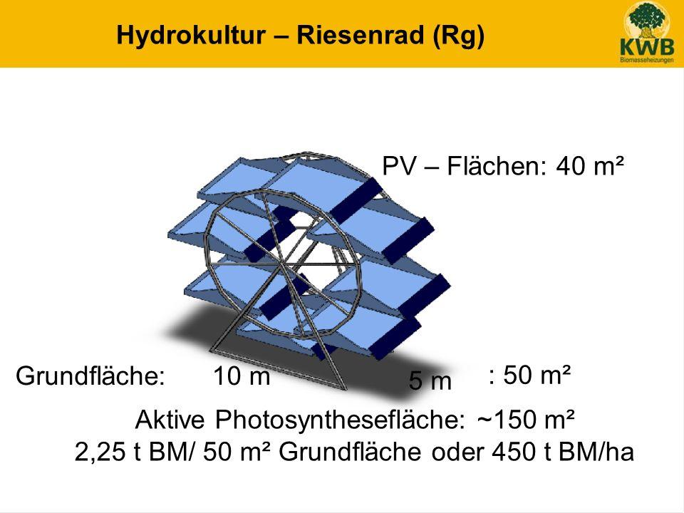 18 Hydrokultur – Riesenrad (Rg) PV – Flächen: 40 m² 5 m 10 mGrundfläche: : 50 m² Aktive Photosynthesefläche: ~150 m² 2,25 t BM/ 50 m² Grundfläche oder