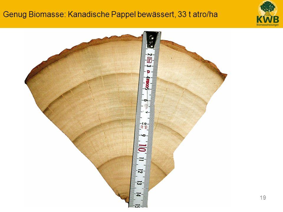 19 Genug Biomasse: Kanadische Pappel bewässert, 33 t atro/ha