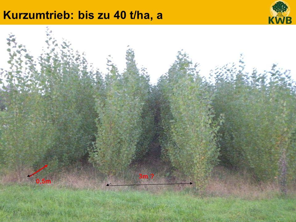20 Kurzumtrieb: bis zu 40 t/ha, a 3m ? 0,5m