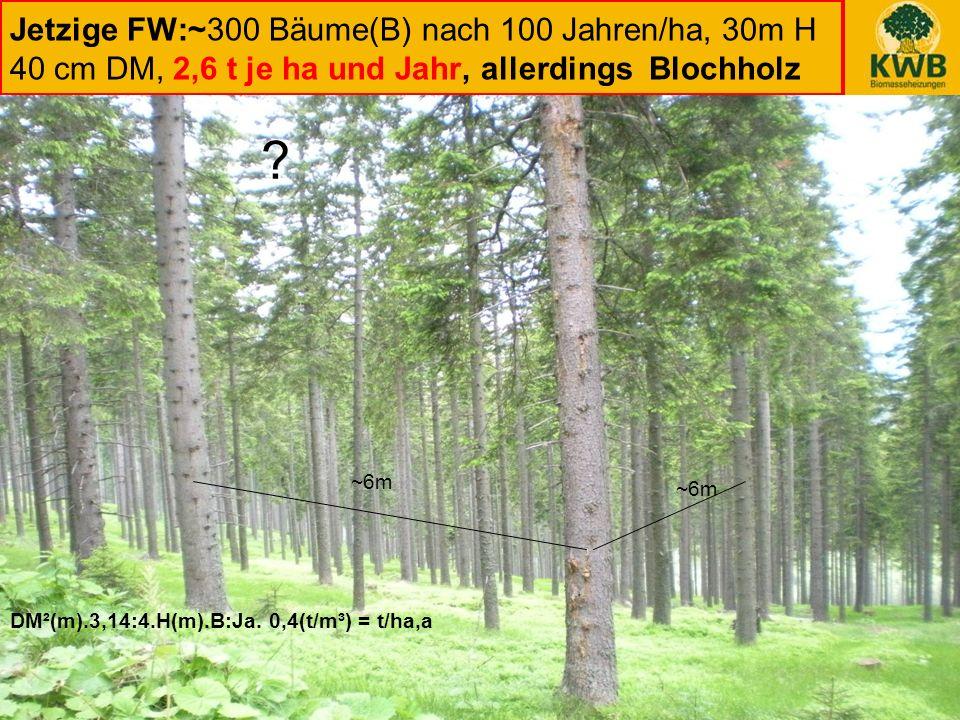 24 Jetzige FW:~300 Bäume(B) nach 100 Jahren/ha, 30m H 40 cm DM, 2,6 t je ha und Jahr, allerdings Blochholz DM²(m).3,14:4.H(m).B:Ja. 0,4(t/m³) = t/ha,a