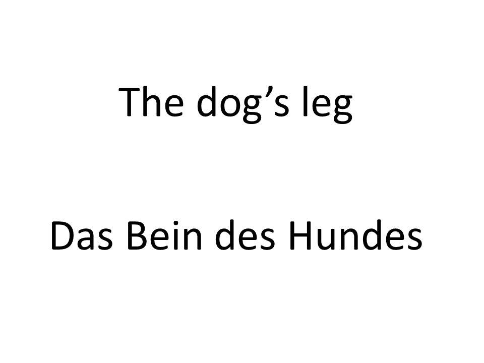 The dogs leg Das Bein des Hundes