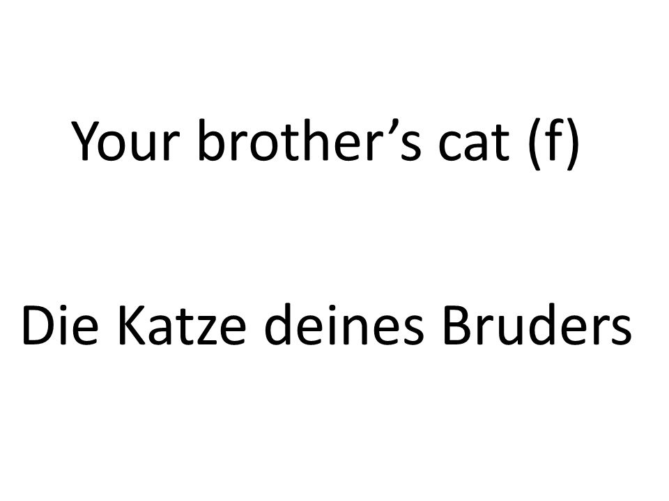 Your brothers cat (f) Die Katze deines Bruders