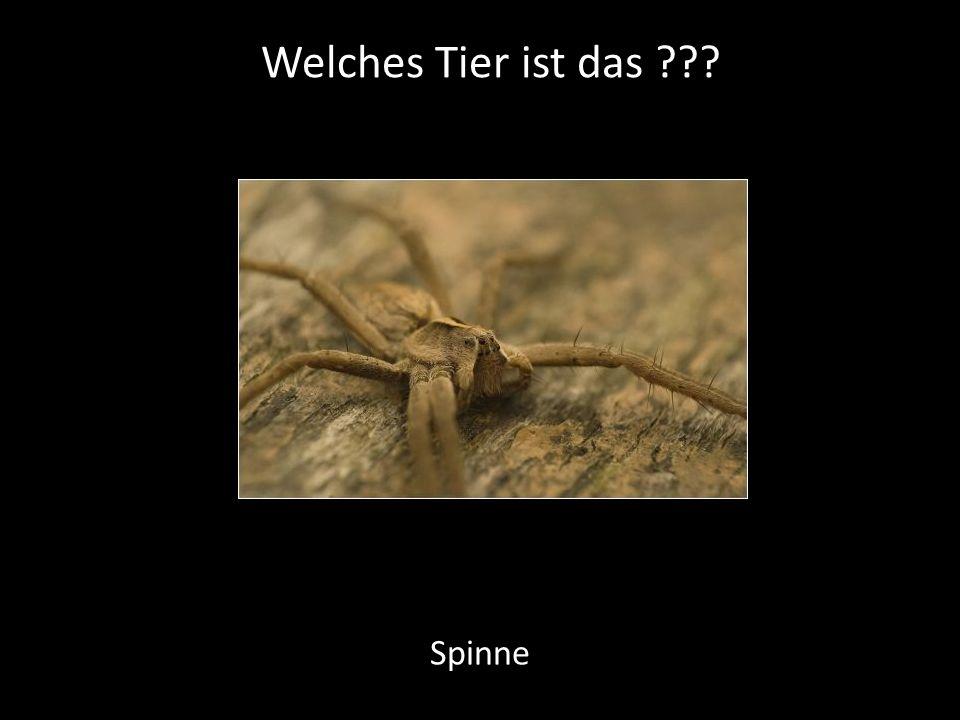 Welches Tier ist das ??? Spinne