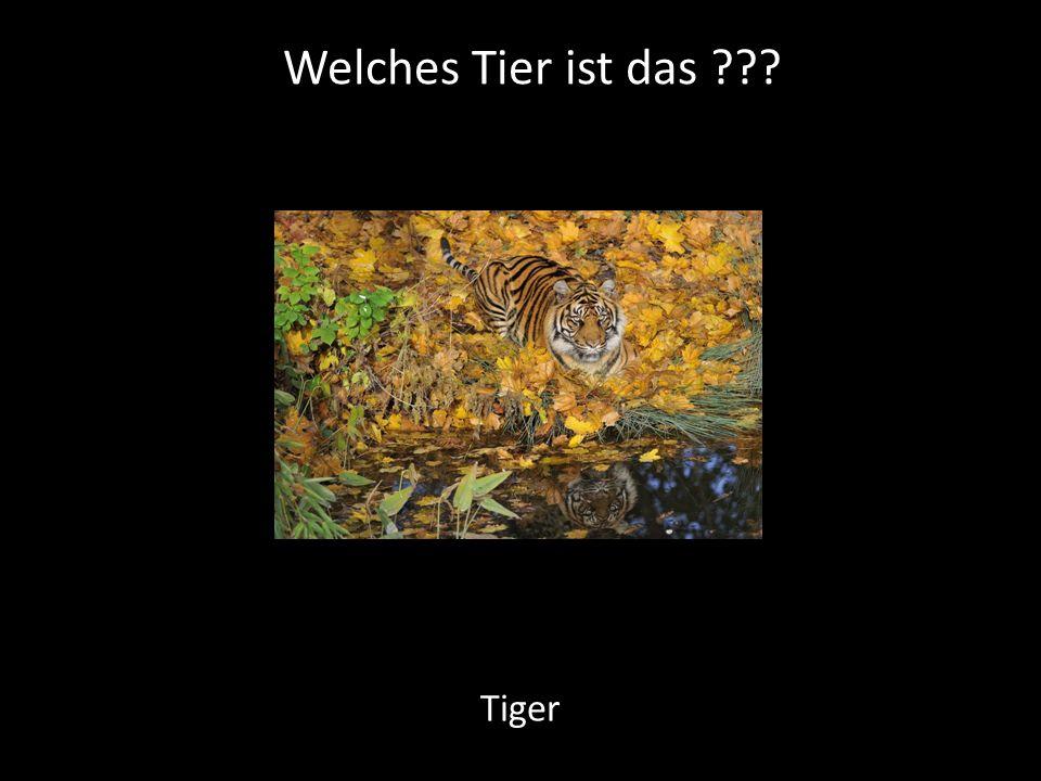 Welches Tier ist das ??? Tiger