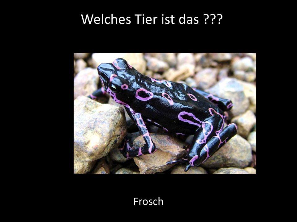 Welches Tier ist das ??? Frosch