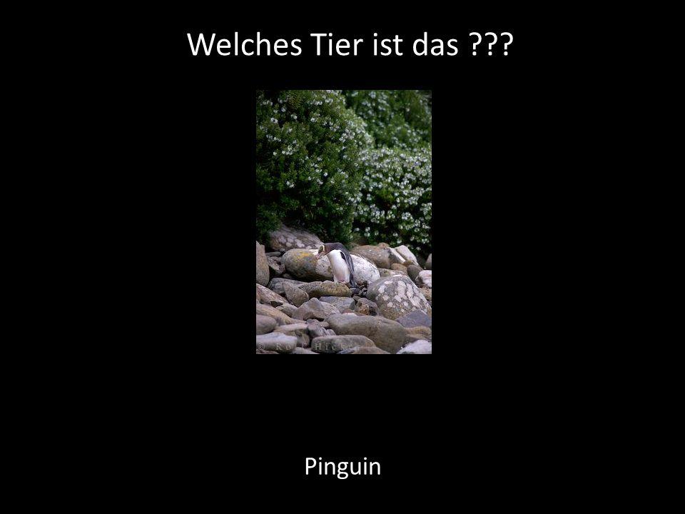 Welches Tier ist das ??? Pinguin