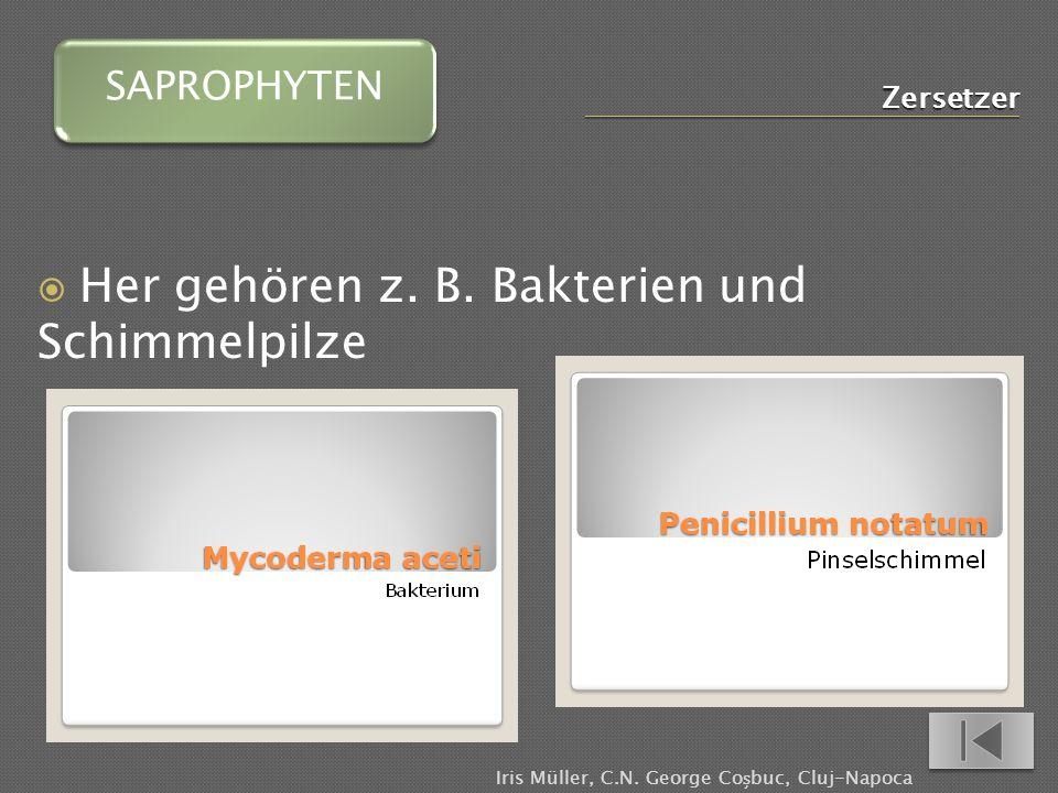 Zersetzer Her gehören z.B. Bakterien und Schimmelpilze SAPROPHYTEN Iris Müller, C.N.