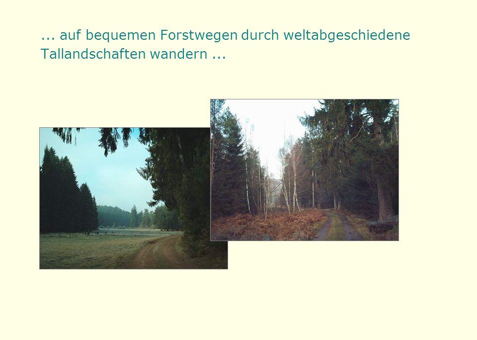 ... auf bequemen Forstwegen durch weltabgeschiedene Tallandschaften wandern...