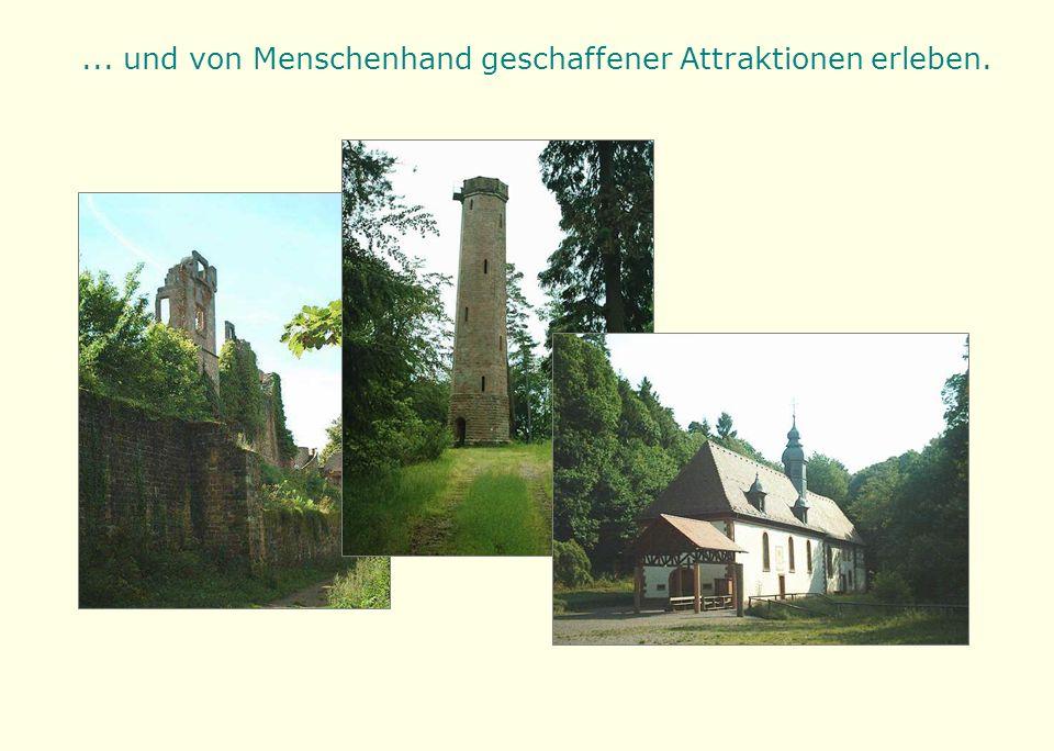 Sie werden im größten zusammenhängenden Waldgebiet Deutschlands unterwegs sein...
