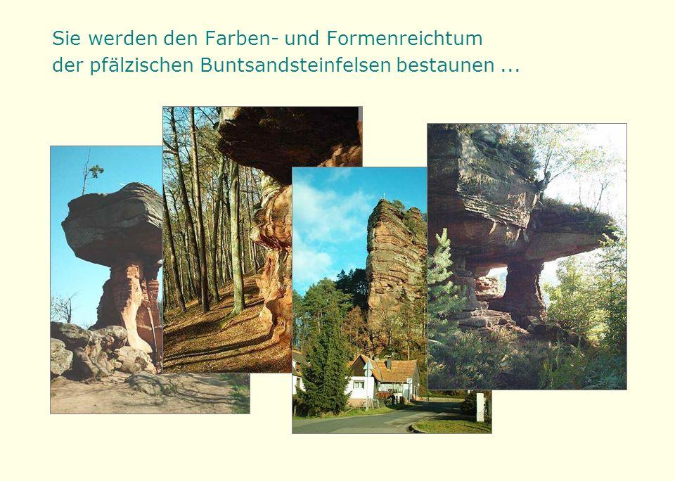 ... und von hohen Gipfeln den Blick über das Wäldermeer und die Rheinebene schweifen lassen.