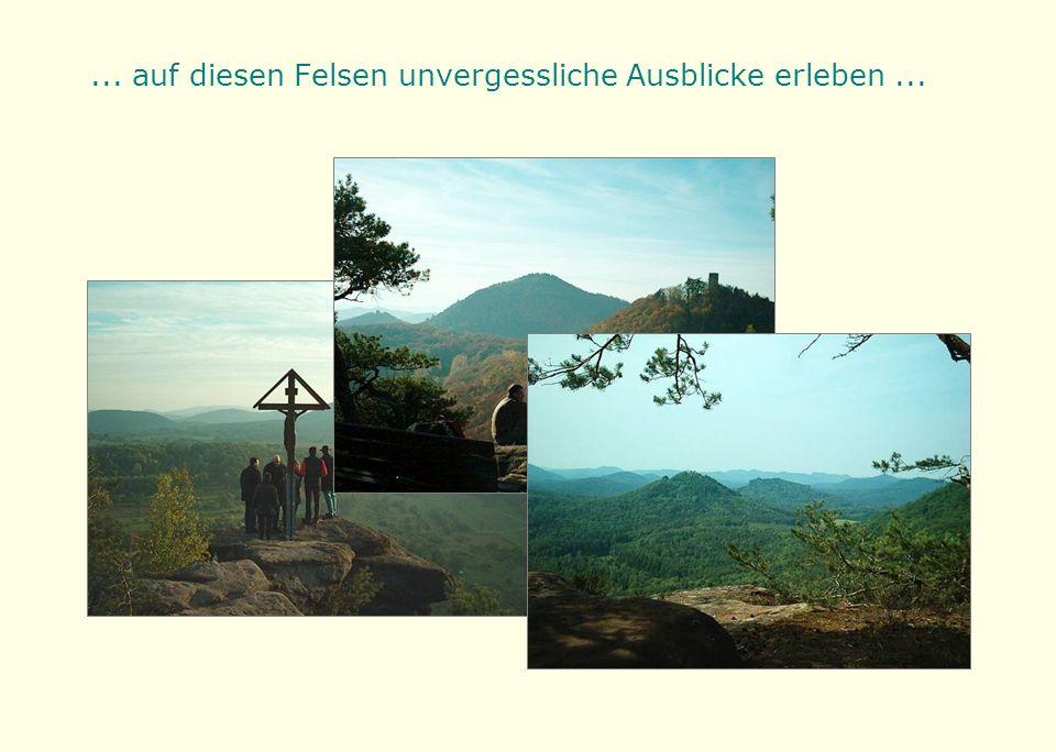 ... und sich an der charakteristischen Vegetation der Felsplattformen erfreuen.