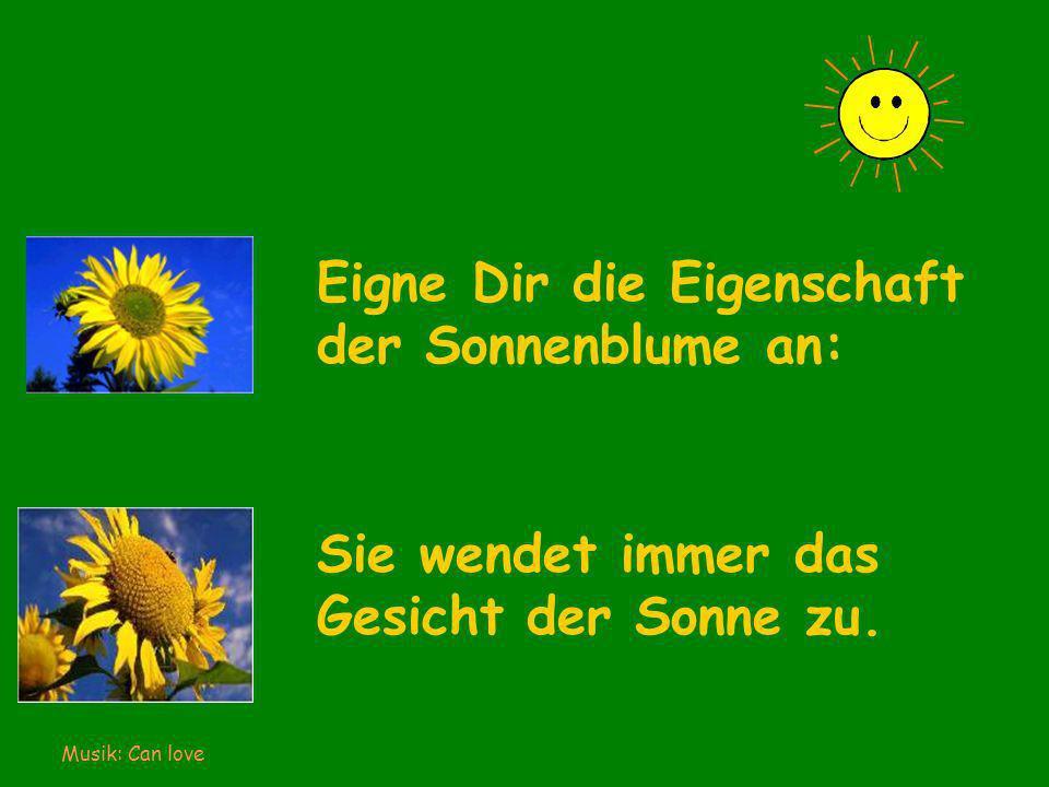 Eigne Dir die Eigenschaft der Sonnenblume an: Sie wendet immer das Gesicht der Sonne zu.