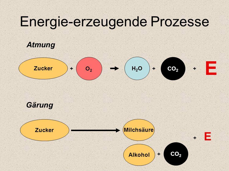 Energie-erzeugende Prozesse Zucker O2O2 + Atmung Gärung Zucker CO 2 + Alkohol H2OH2O CO 2 + + E Milchsäure + E
