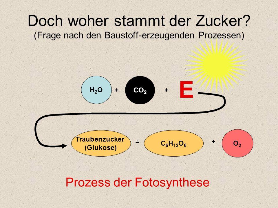 Doch woher stammt der Zucker? (Frage nach den Baustoff-erzeugenden Prozessen) Traubenzucker (Glukose) C 6 H 12 O 6 = H2OH2O CO 2 + + E Prozess der Fot