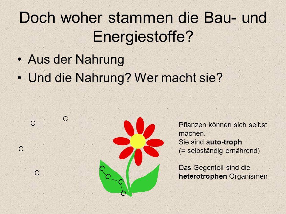Doch woher stammen die Bau- und Energiestoffe? Aus der Nahrung Und die Nahrung? Wer macht sie? C C C C C C C C Pflanzen können sich selbst machen. Sie