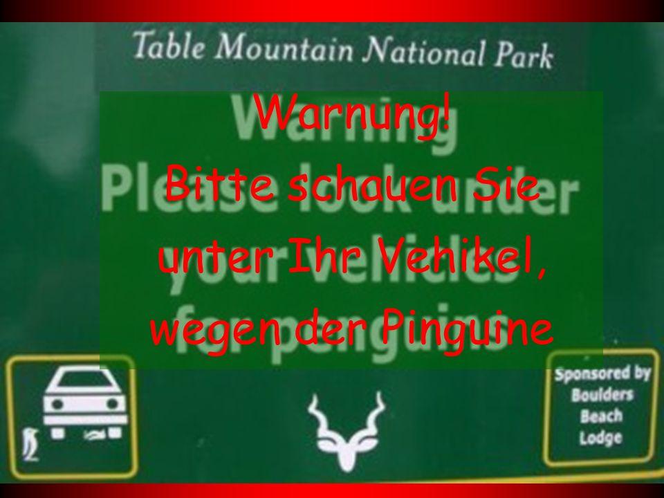 Warnung! Bitte schauen Sie unter Ihr Vehikel, wegen der Pinguine