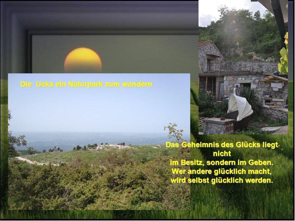 Freut euch an den kleinen Dingen, Genießt den Sommertag unter Weintrauben auf unserer großen Terrasse oder im großen Garten