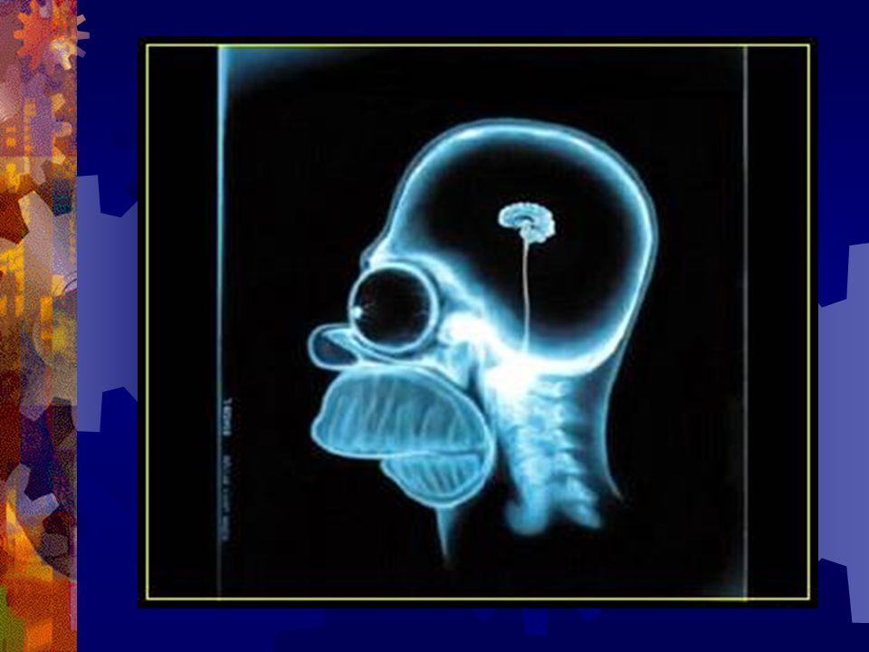 Er schlug deshalb vor, ich sollte einmal meinen Kopf untersuchen lassen...