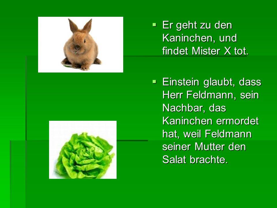 Er geht zu den Kaninchen, und findet Mister X tot. Er geht zu den Kaninchen, und findet Mister X tot. Einstein glaubt, dass Herr Feldmann, sein Nachba