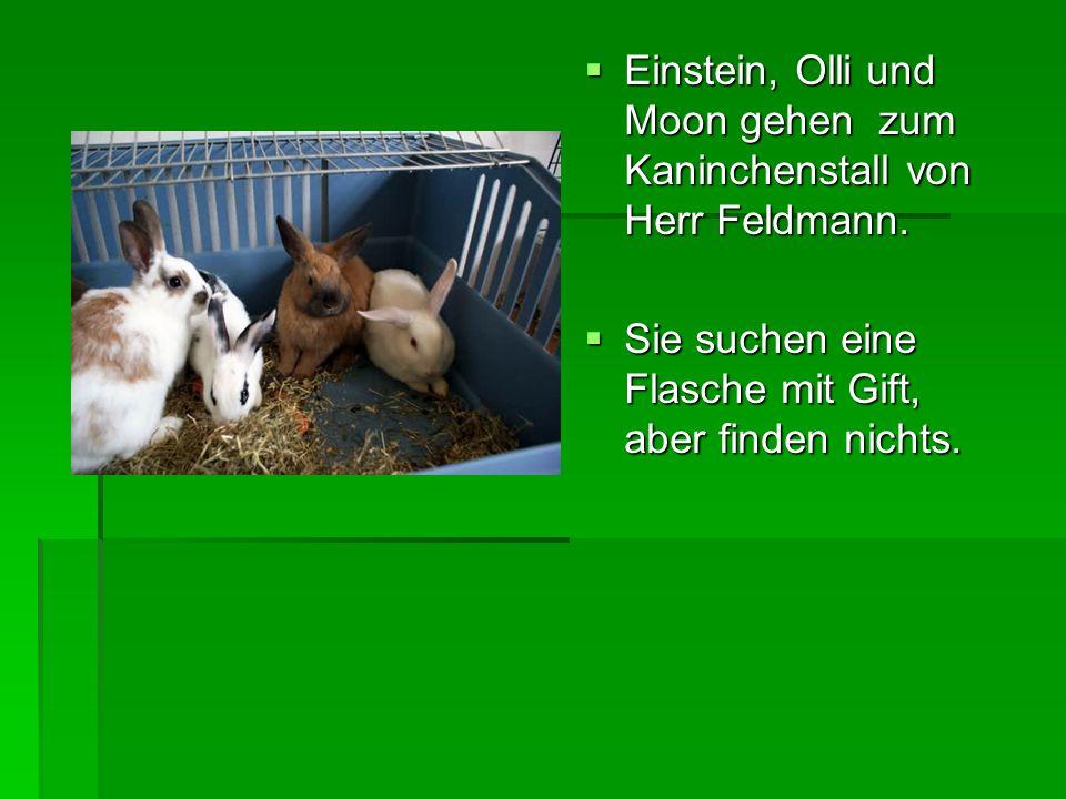Einstein, Olli und Moon gehen zum Kaninchenstall von Herr Feldmann.